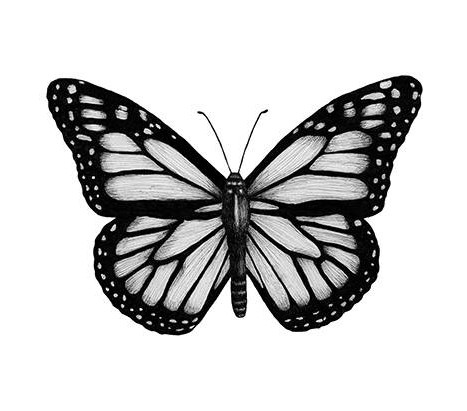 en fjäril i närbild, svart och vit.